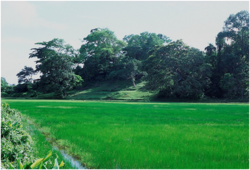 Before the 2004 tsunami, Sippighat was dominated by paddy fields. 