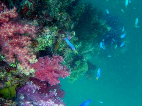 Coral reefs on decline due to overfishing, pollution fuelled by climate change