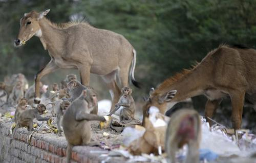Supreme Court refuses to stay culling of vermin in Himachal, Bihar and Uttarakhand