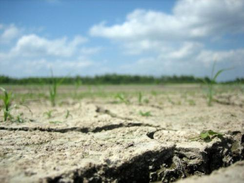 Drought can affect the agriculture sector in several ways: by reducing crop yields and productivity and by causing premature death of livestock and poultry