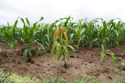 A recent report published in Down To Earth points out that desertification has turned out to be a big challenge for Africa, seriously undermining its efforts in sustainable soil management