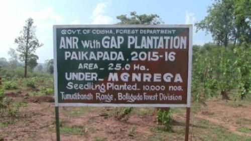 Plantations, CAMPA loom large over community rights