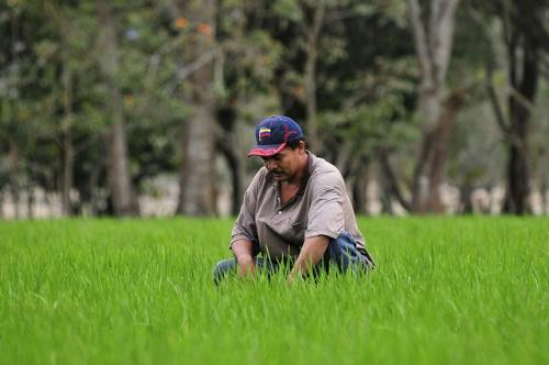 Agriculture contributes to 5 per cent of the region's gross domestic product, 23 per cent of regional exports and employs 16 per cent of the population
