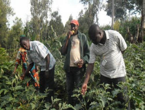 Burundi's sustainability lies in embracing integration in agriculture
