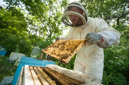 Antibiotics will not be available over the counter to beekeepers. (Credit: iStock)