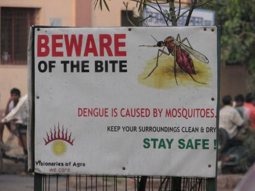 Stung by Aedes