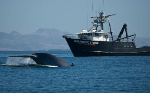 It's time to speak up about noise pollution in the oceans