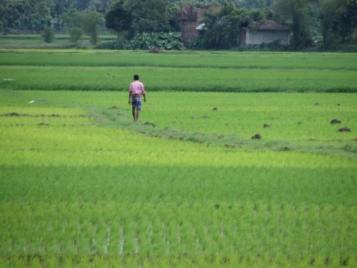 Meet the Kerala farmer who preserves genetic diversity of rice