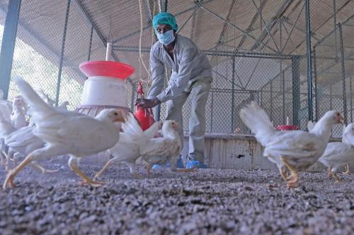 FAO charts action plan to combat antimicrobial resistance in food and agriculture