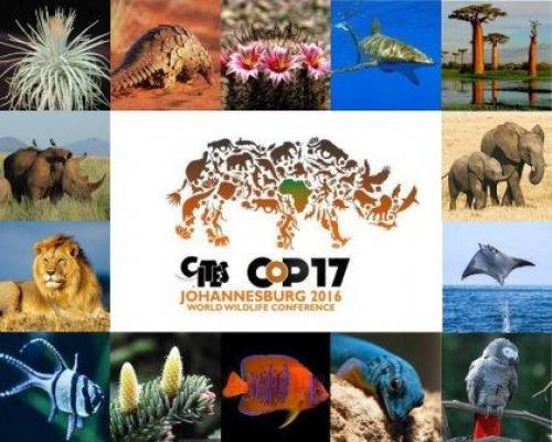 CITES entered into force on 1 July 1975 and has now 183 Parties