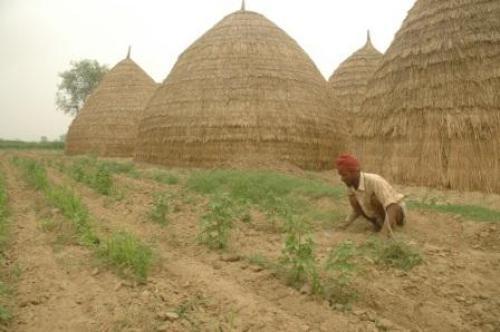 When it comes to farming, 85 per cent farmers in India are small and marginal ones Credit: Agnimirh Basu