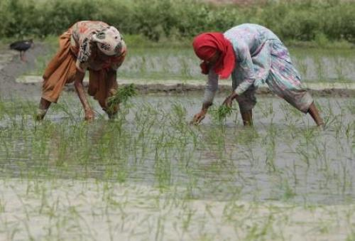 Smallholder women farmers are more exposed to climate risks than men