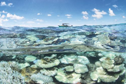 Coral bleaching in the Maldives in May 2016 (Photographs: Xl Catlin Seaview Survey)