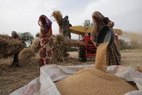 The report warns that a warmer world will significantly reduce agricultural productivity. Shortage in food supply will lead to increased food prices and impact millions of poor people
