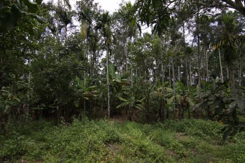 बजट 2020-21: सरकार स्थापित कर सकती है राष्ट्रीय पौधरोपण निगम