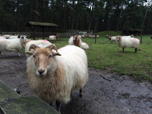 A $996-million plan to eradicate deadly sheep and goat plague