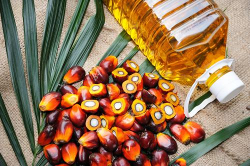 Palm oil constitutes about 80 per cent of all edible oil imports in India (Credit: iStock)