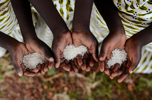 Cereal productivity in low-income African countries stands at 1.3 tonnes per hectare, much lower than other regions of the world (Credit: iStock)