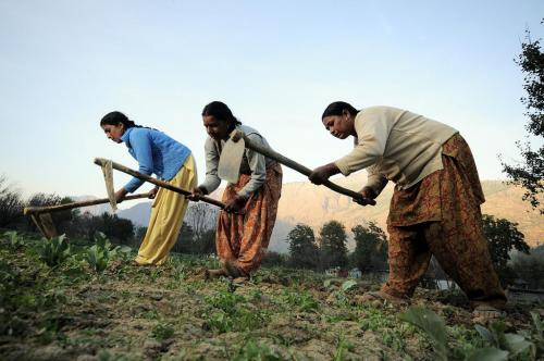 How is Centre making skewed projections to show success of agri-insurance scheme?