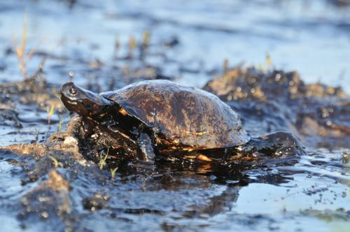 Nearly half a dozen turtles died near the north Chennai shoreline (Credit: iStock)
