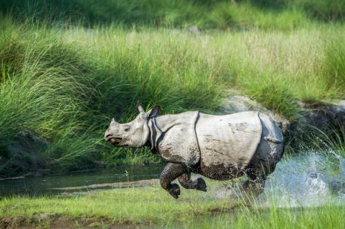 Kaziranga National Park hosts around two-thirds of the world's greater one-horned rhinos (Credit: iStock)
