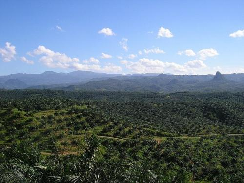 The rate of deforestation in Indonesia has overtaken Brazil. In Southeast Asia, oil palm plantations contribute to forest loss