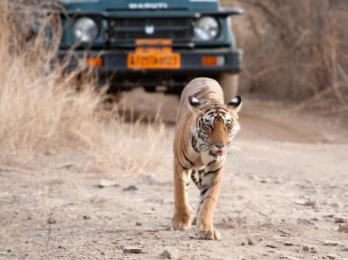 Corbett Tiger Reserve issues shoot-at-sight order to tackle poaching