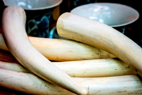 A ban on all domestic ivory products was passed by the International Union for Conservation of Nature in 2016 (Credit: iStock)