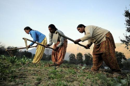 Women also spend about 3,300 hours more in the fields during a crop season as against 1,860 hours spent by men