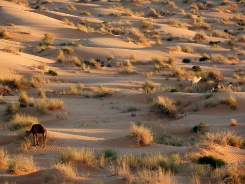 Humans may have transformed the Sahara from lush paradise to barren desert