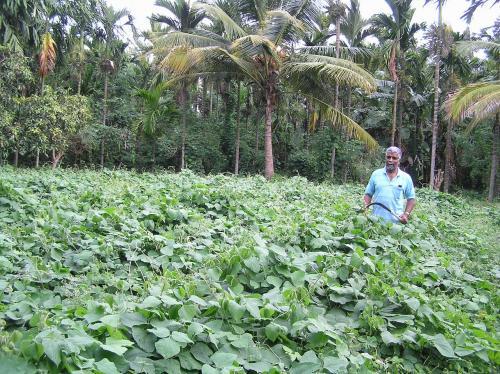 No fertilisers, no pesticides, this Karnataka farmer uses only solar energy