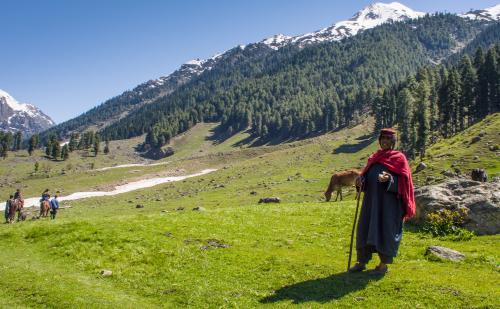 A nomad Gujjar woman tending to her herds in the alpine valley of the Lidder river in Kashmir  Credit: Flickr
