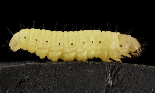 Caterpillars could hold the key to managing plastic waste: study