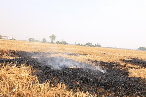 पराली जलाए जाने की घटना में 50 फीसदी कमी, गंभीर प्रदूषण की जद में उत्तर भारत के शहर