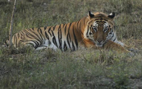 Union Budget 2020-21: Big chunk goes to tigers and elephants