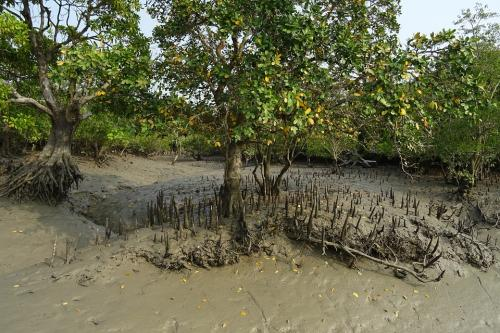 Scientists find new bacterium from Sundarbans