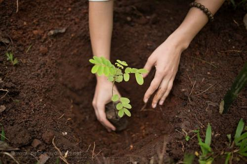 Combating soil pollution vital for addressing climate change