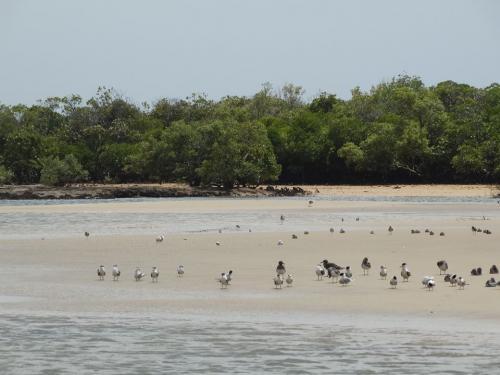 Kenya's Tana River Delta under threat from development projects