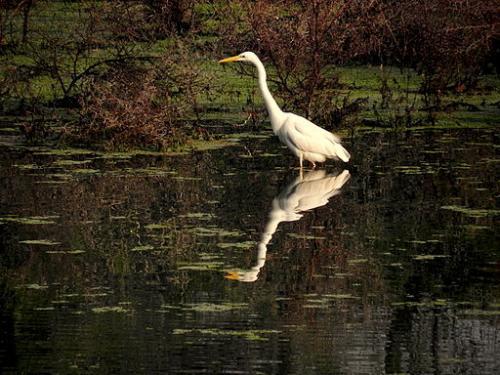 भरतपुर के केवलादेव से विलुप्त हुईं कई जीव प्रजातियां