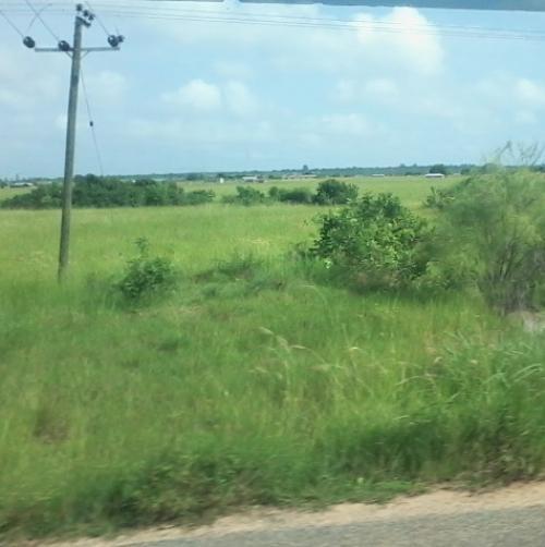 Fertile land lying barren in Ghana (Credit: A K Ghosh)