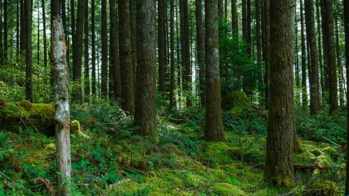 Here's how we can fill gaps in forestry data