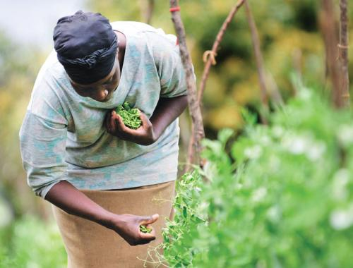 How to make Africa food self-sufficient, again?