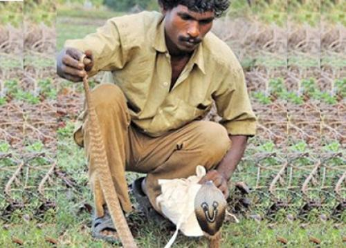 Half the global snake bite deaths happen in India. Why are we not prepared?