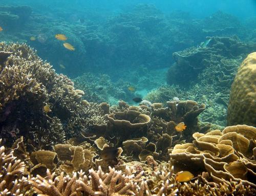खतरे में प्रवाल-भित्तियां