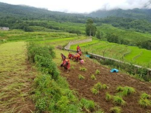 Women working in the field in Dolakha, Nepal. It does not make sense for a region like ours, where many depend on subsistence agriculture, to focus on cultivating only a few crop species
