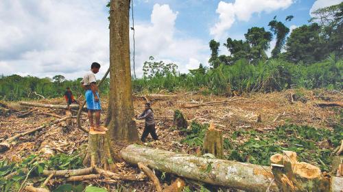 India's demand for teak wood endangers Ecuador's rainforests