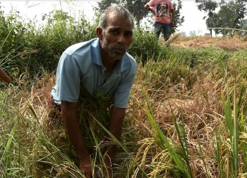 Odisha's deadly farmlands: Another farmer commits suicides due to crop loss
