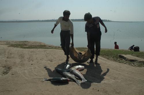 Tamil Nadu fisherfolk urge government to prepare for sea level rise