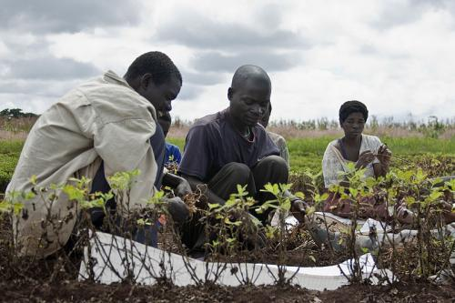 What needs to be done to give Africa's smallholder farmers access to machinery