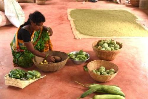 Aranya, spread over 10 acres (a little more than 2 hectares), is home to at least 100 varieties of plants. This diversity is the keyword in permaculture Credit: Adithyan PC